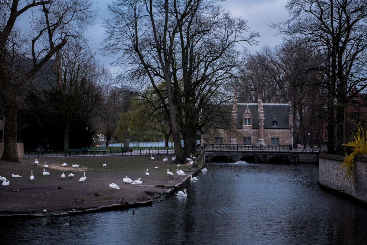 Bruges (60)